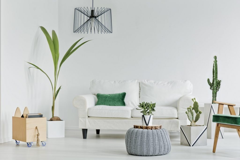 Living room with decorative houseplants